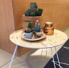 Stilleven, schattige cactusjes in kleine potjes van Bloomingville.