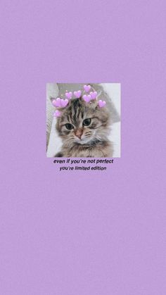Simple Wallpapers, Pretty Wallpapers, Anime Devil, Iphone Wallpaper Vsco, Some Pictures, Cats And Kittens, Haha, Diy And Crafts, Cute Animals