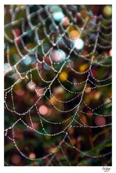 cobweb ... a good luck! .. X ღɱɧღ ||
