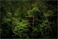 FINCA BELLAVISTA | Tree House Community in Costa Rica;  You move arround mostly with cables that pass through platforms up to 28 meters high, and is today a large community with tree houses, self-sufficient energy and living amidst 300 acres of secondary tropical forest.