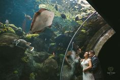 Michele & Zach's Florida Aquarium Wedding