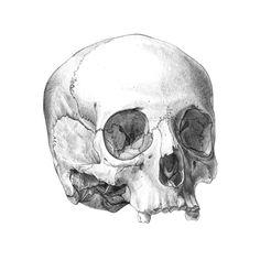 Filipe Franco - Crânio humano. Grafite s/ papel