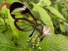 Estime de soi : Le papillon rare - Un monde meilleur