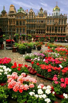 La Grand-Place in Brussels, Belgium, always filled with flowers - I loved Brussels and Bruges the capital and largest city of the province of West Flanders in the Flemish Region of Belgium).