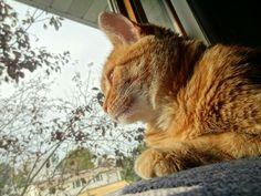 #cat #kitty #kitten #orangetabby #domesticshorthair