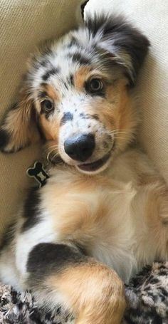 Smiling puppy.
