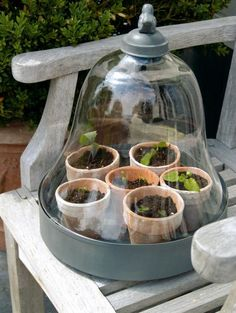 Bell Shaped Cloche with Tray for Starting Seeds | Content in a Cottage