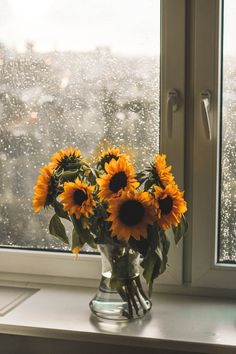 Sunflower Vase, Yellow Sunflower, Flower Vases, Flower Arrangements, Fresh Flowers, Beautiful Flowers, Flowers Background, Sunflower Iphone Wallpaper, Planting Sunflowers
