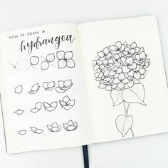 How to draw hydrangea flowers. On the left, i break down the steps to drawing the individual flowers (which have four simple petals) from different perspectives. On the right, I put them together into a bunch! To make the bunch, be sure to start with a circular or oval shaped guide to help know where the edge of the bunch will be! Tag me or use #bonjournal to show me yours!!!