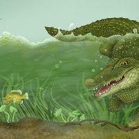 The Swamp Where Gator Hides interior » Roberta Baird