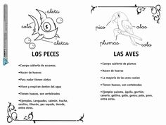 Álbum - Google+ Animal Classification, Life Cycles, Social Studies, Spanish, Teacher, Science, Album, Activities, Education