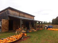 Road trip Canada jour 2 Les citrouilles d'Halloween et peintures sur citrouille