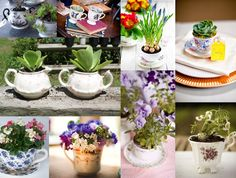 succulents and tea cups