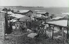 Beach side shanties at La Perouse, Sydney, 1920s. Dotty lived in a similar shack in the next suburb, Maroubra.