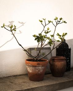 http://daniellawitte.elledecoration.se/