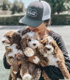 Mini Goldendoodle Breeders, Golden Doodles, Northern California, Cute Dogs, Riding Helmets, Puppies, Cubs, Goldendoodles, Puppys