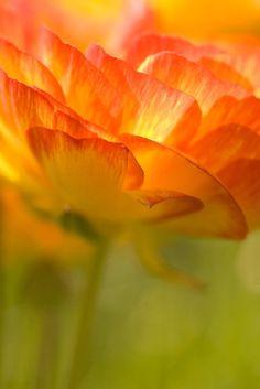 flowers like poetry