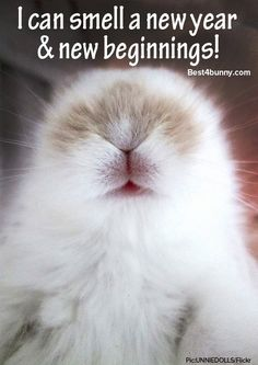 Lets hope the New Year brings many New Beginnings for all the beautiful bunnies in rescues, waiting for a forever home.  http://best4bunny.com/