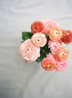 Blush, pink, and coral ranunculus
