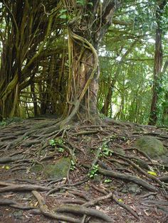 שירה וולמן צילמה לי בהוואי הפראית