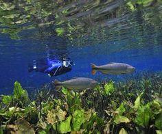 Aquário Natural (Reserva Ecológica Baía Bonita)  - Foto: Andre Sealle
