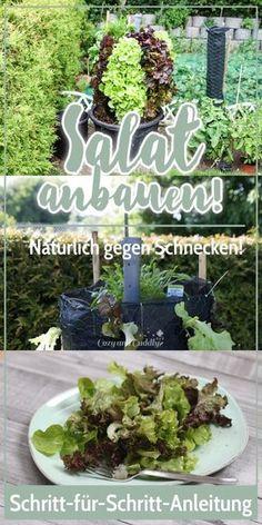 Salatturm   Schnecken Sicher Salat Im Eigenen Garten Züchten   Mit Tipps!