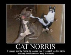 Cat Norris