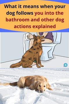 Dogs obviously can't talk, so they often have to find other ways to communicate what it is that they want or need. Some of their actions can seem a bit strange (like following you into the bathroom) but there is a chance that there is actually a good reason for that. If you're curious about some of your dog's strange behaviors, keep reading! Your Dog, Reading, The Reader, Reading Books