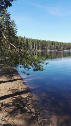 #järvi #metsä #lake #forest #Finland Valokuva - Google Kuvat