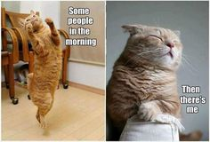 I'm the morning cat all day