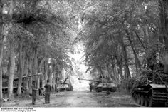 A road full of tigers. German Tiger II heavy tanks at Canteloup France July 1944. Credit: Bundesarchiv Bild 101I-721-0364-06.