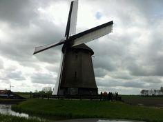 Windmill - Schermer