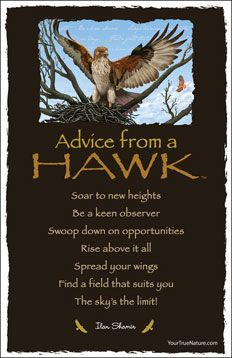 Advice from a Hawk Frameable Art Postcard
