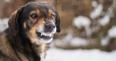 Science Proves That You Can Probably Speak Dog, at Least with Growling