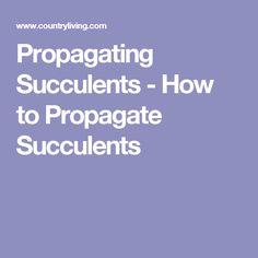 Propagating Succulents - How to Propagate Succulents