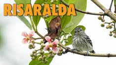 Risaralda: One of the departments with more bird species in Colombia – Bird Watching Colombia Animal Species, Bird Species, Colombian Coffee, Natural Park, Amazon Rainforest, Countries Of The World, Bird Watching, Luxury Travel, Exotic