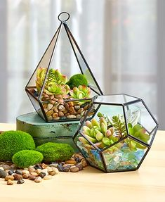"""Build your own succulent garden with this Decorative Terrarium or Filler. The glass and metal Teardrop Terrarium (4-1/2"""" sq. x 7""""), which can sit or ha"""