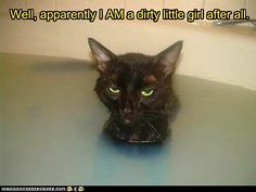 This is a cat who truly loves a bath. NOT!  :)