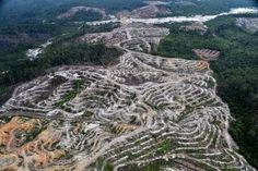 deforestation birds eye view - Google Search