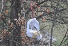 How to make a bird feeder out of a milk jug