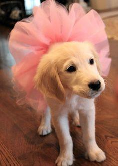 I am ready for ballet class.