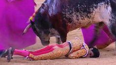 """""""O Grito do Bicho"""": Abate da mãe de touro que matou toureiro na Espanh..."""