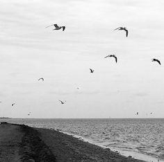 #birds #textures #nature #naturelovers #beach #view #minimalist #minimal #bw #bnw #blackwhite #blackandwhite #blackwhitephotography #blackandwhitephotography #monochrome #grayscale