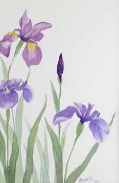 Springs Aristocrats watercolour by Angela Fehr Iris Painting, Spring Painting, Watercolour Painting, Painting & Drawing, Watercolors, Spring Drawing, Watercolor Pictures, Watercolor Cards, Watercolor Flowers