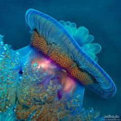 Beautiful Blue Sea Creature - -if you look hard enough you can see a face.