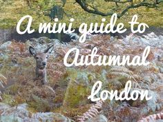 All the things I plan to do in London during autumn!