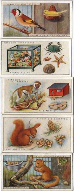Our Pets | Ringer's and Biggs Cigarette cards 1926