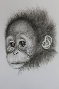 A highly detailed hand drawn original of an innocent wide-eyed baby orang utan. Drawn using Faber Castell graphite pencils on smooth white Bristol paper and has been spray sealed to protect the image. Clearly signed by the artist and supplied with a certificate of authenticity.  The drawing is approx 7 x 9 inches. Paper size is 10 x 14 inches.