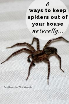 House Cleaning Tips, Cleaning Hacks, Deep Cleaning, Cleaning Products, Get Rid Of Spiders, Cleaning Painted Walls, Clean Dishwasher, Simple Life Hacks, Pest Control