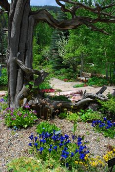 betty ford alpine garden love the tree root with flowers. Cars Review. Best American Auto & Cars Review